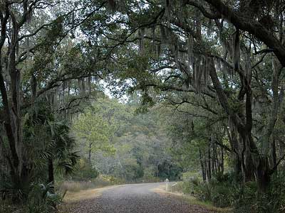 Tallahassee Oak Canopy over Road